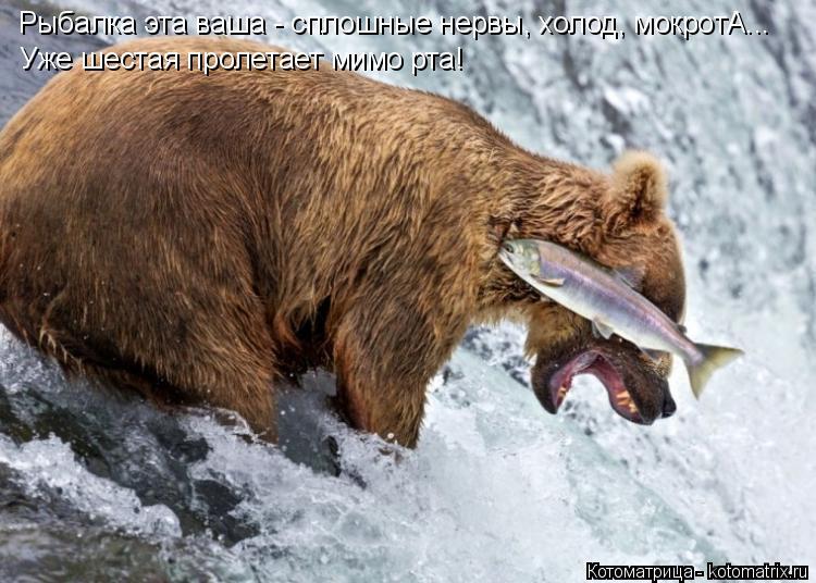 Котоматрица: Рыбалка эта ваша - сплошные нервы, холод, мокротА... Уже шестая пролетает мимо рта!