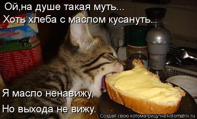 Котоматрица: Ой,на душе такая муть... Хоть хлеба с маслом кусануть. Я масло ненавижу, Но выхода не вижу.