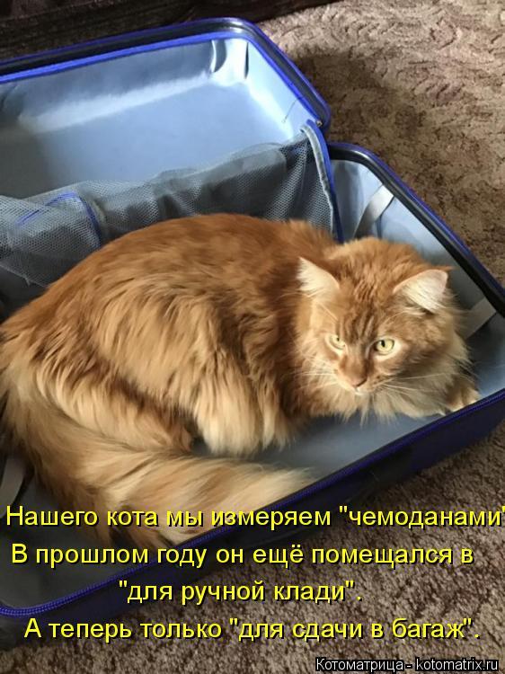 """Котоматрица: Нашего кота мы измеряем """"чемоданами"""". В прошлом году он ещё помещался в А теперь только """"для сдачи в багаж"""". """"для ручной клади""""."""
