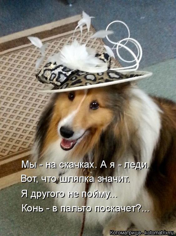 Котоматрица: Мы - на скачках. А я - леди. Вот, что шляпка значит. Я другого не пойму... Конь - в пальто поскачет?...