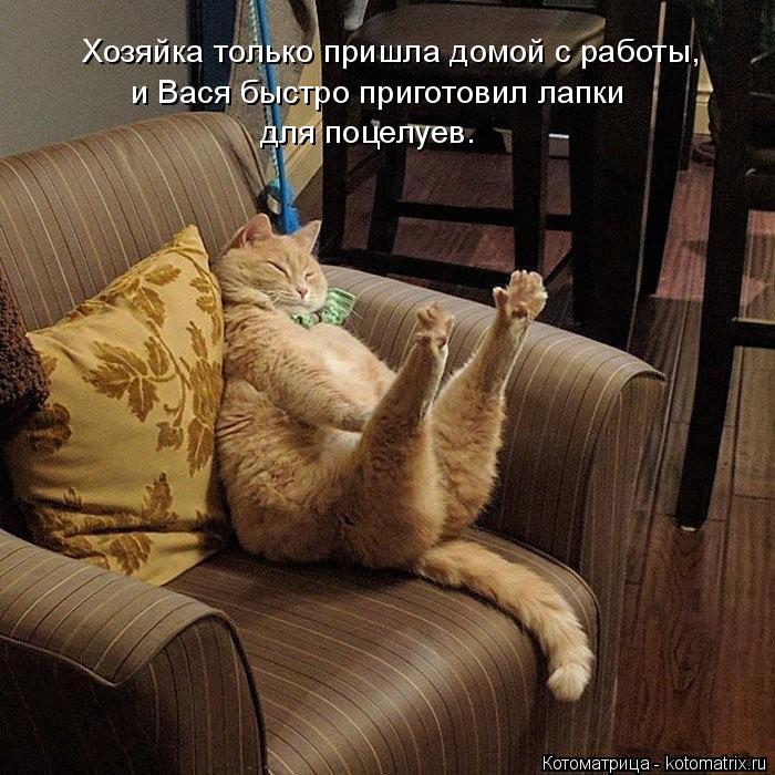 Котоматрица: Хозяйка только пришла домой с работы,  и Вася быстро приготовил лапки  для поцелуев.