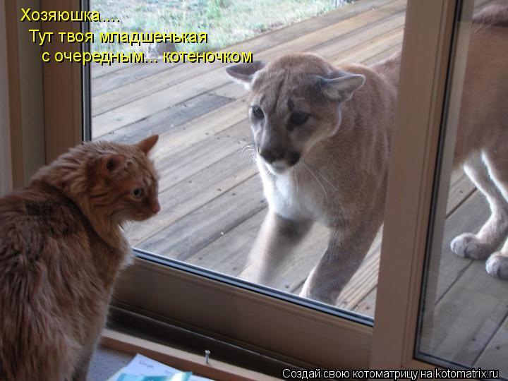 Котоматрица: Хозяюшка.... с очередным... котеночком Тут твоя младшенькая
