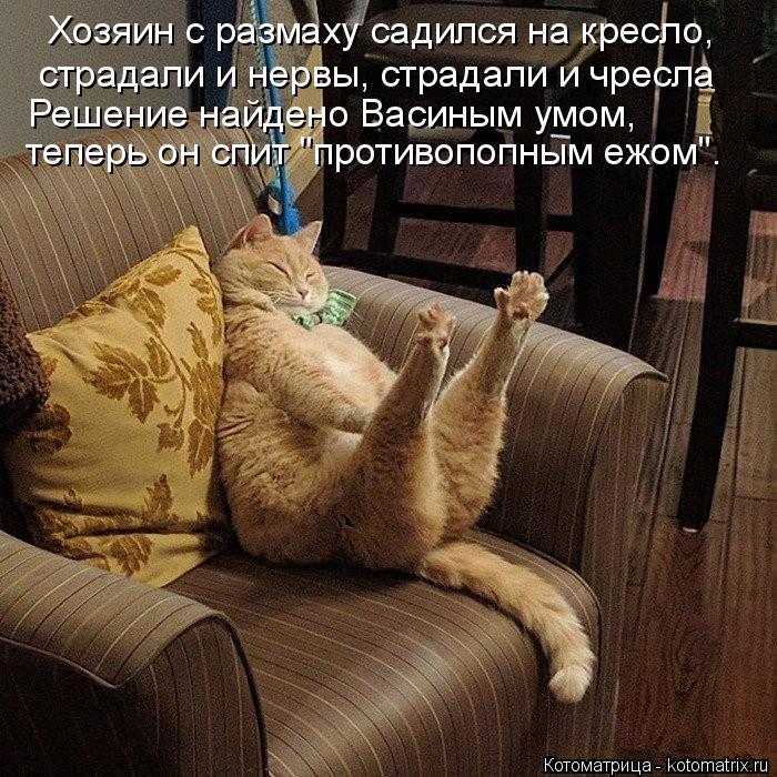 """Котоматрица: Хозяин с размаху садился на кресло, страдали и нервы, страдали и чресла теперь он спит """"противопопным ежом"""". Решение найдено Васиным умом,"""