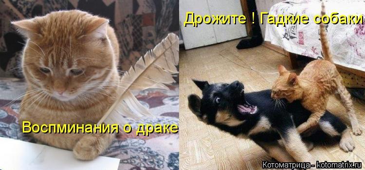 Котоматрица: Воспминания о драке Дрожите ! Гадкие собаки !