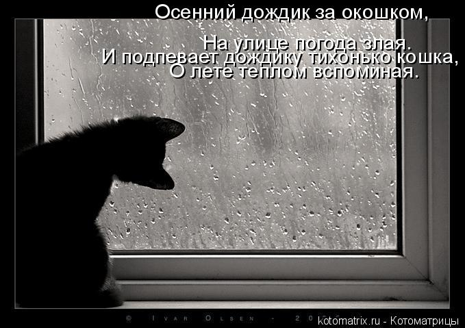 Котоматрица: На улице погода злая. И подпевает дождику тихонько кошка, О лете теплом вспоминая. Осенний дождик за окошком,