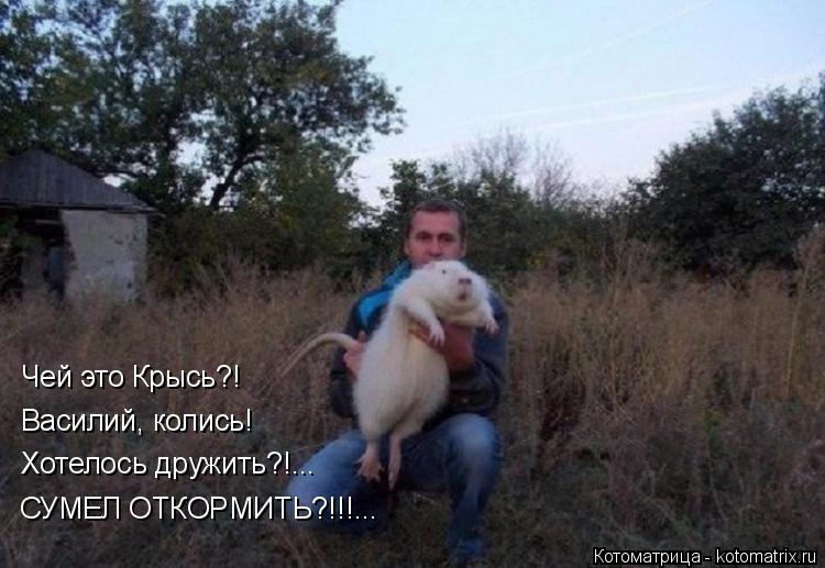 Котоматрица: СУМЕЛ ОТКОРМИТЬ?!!!... Хотелось дружить?!... Василий, колись! Чей это Крысь?!