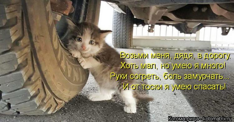 Котоматрица: Возьми меня, дядя, в дорогу. Хоть мал, но умею я много! Руки согреть, боль замурчать... И от тоски я умею спасать!