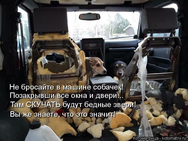 Котоматрица: Позакрывши все окна и двери... Не бросайте в машине собачек! Там СКУЧАТЬ будут бедные звери! Вы же знаете, что это значит!