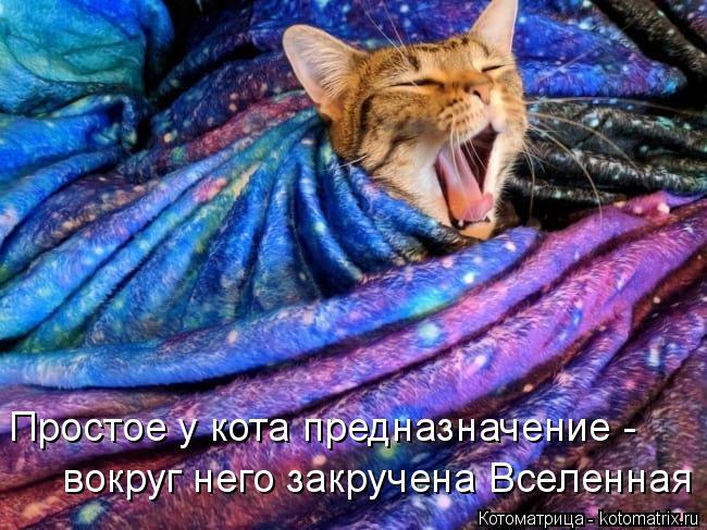 Котоматрица: вокруг него закручена Вселенная Простое у кота предназначение -