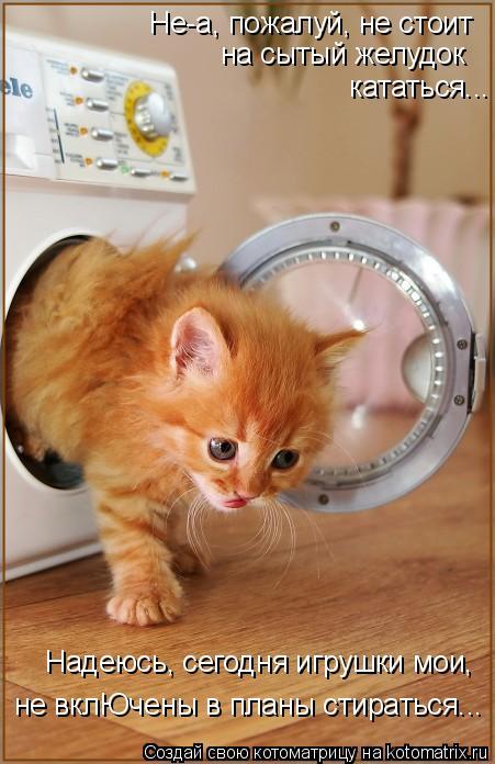 Котоматрица: Не-а, пожалуй, не стоит  на сытый желудок кататься... Надеюсь, сегодня игрушки мои, не вклЮчены в планы стираться...