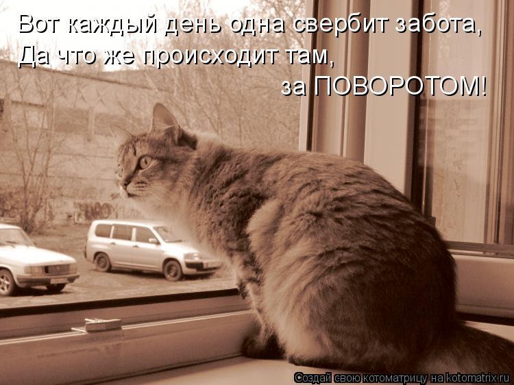Котоматрица: Вот каждый день одна свербит забота, Да что же происходит там, за ПОВОРОТОМ!