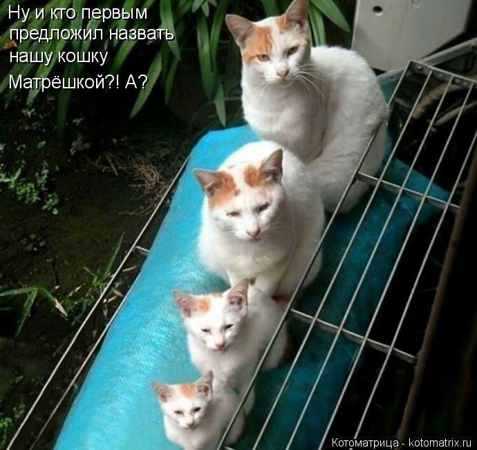 Котоматрица: Ну и кто первым  предложил назвать  нашу кошку Матрёшкой?! А?