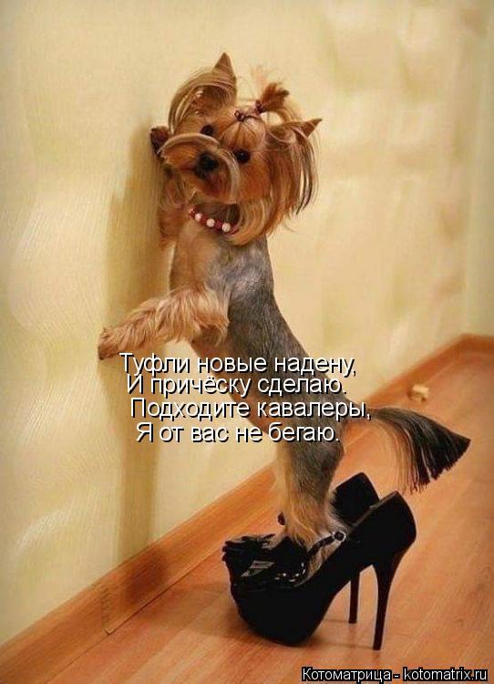 Котоматрица: Туфли новые надену, И причёску сделаю. Подходите кавалеры, Я от вас не бегаю.