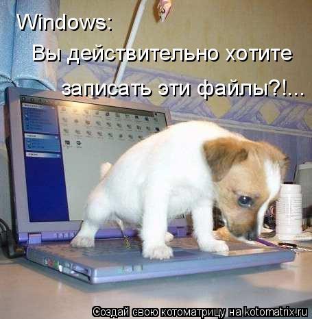 Котоматрица: Windows:  Вы действительно хотите  записать эти файлы?!...