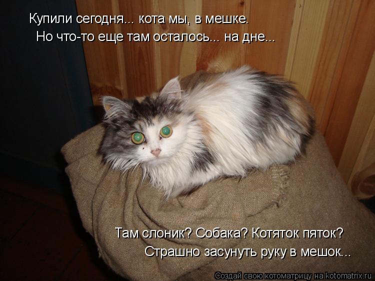 Котоматрица: Купили сегодня... кота мы, в мешке. Но что-то еще там осталось... на дне... Там слоник? Собака? Котяток пяток? Страшно засунуть руку в мешок...