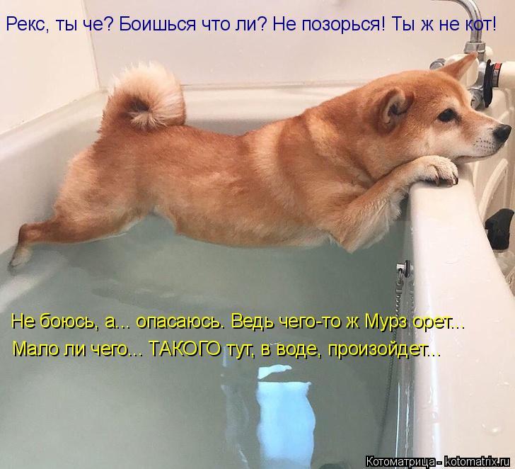 Котоматрица: Рекс, ты че? Боишься что ли? Не позорься! Ты ж не кот! Не боюсь, а... опасаюсь. Ведь чего-то ж Мурз орет... Мало ли чего... ТАКОГО тут, в воде, произой
