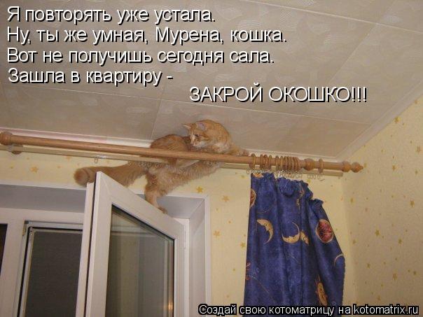 Котоматрица: Я повторять уже устала. Ну, ты же умная, Мурена, кошка. Вот не получишь сегодня сала. Зашла в квартиру -  ЗАКРОЙ ОКОШКО!!!