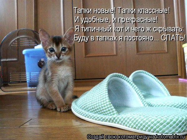 Котоматрица: Буду в тапках я постояно... СПАТЬ! Я типичный кот и чего ж скрывать: И удобные, и прекрасные! Тапки новые! Тапки классные!