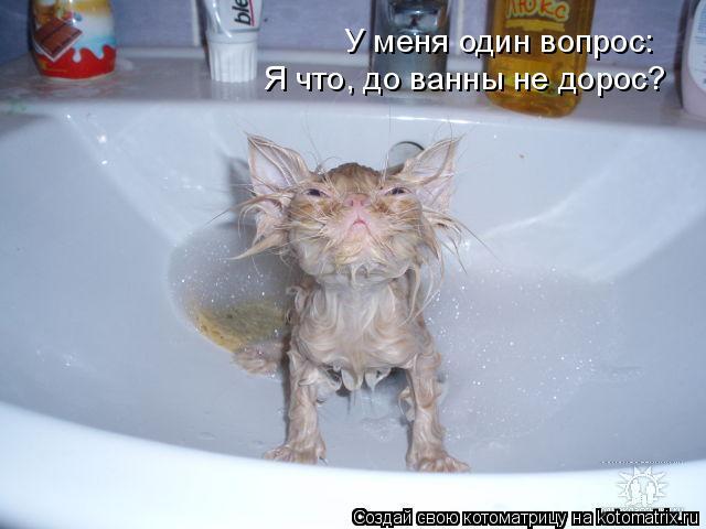 Котоматрица: У меня один вопрос: Я что, до ванны не дорос?