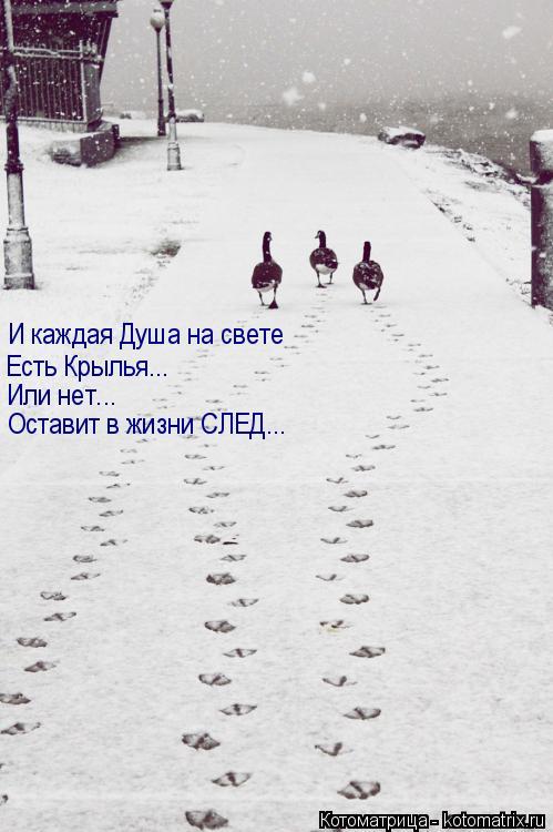 Котоматрица: И каждая Душа на свете Есть Крылья...  Или нет... Оставит в жизни СЛЕД...