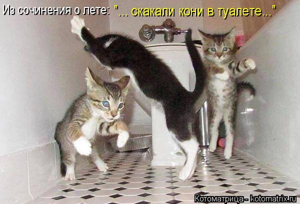 """Котоматрица: Из сочинения о лете: """"... скакали кони в туалете..."""""""