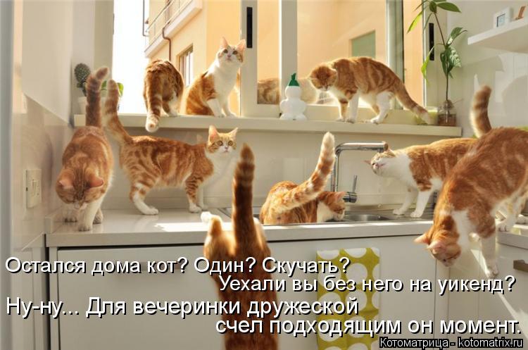 Котоматрица: Ну-ну... Для вечеринки дружеской  счел подходящим он момент. Остался дома кот? Один? Скучать?  Уехали вы без него на уикенд?