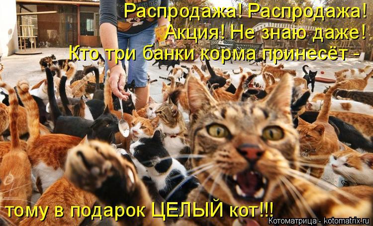 Котоматрица: Распродажа! Распродажа! Акция! Не знаю даже! Кто три банки корма принесёт - тому в подарок ЦЕЛЫЙ кот!!!