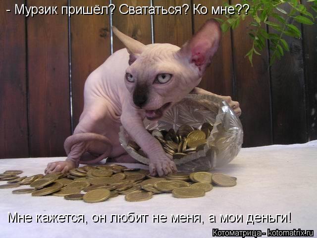 Котоматрица: - Мурзик пришёл? Свататься? Ко мне??  Мне кажется, он любит не меня, а мои деньги!