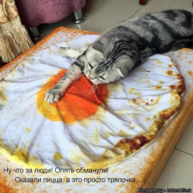 Котоматрица: Ну что за люди! Опять обманули! Сказали пицца, а это просто тряпочка...