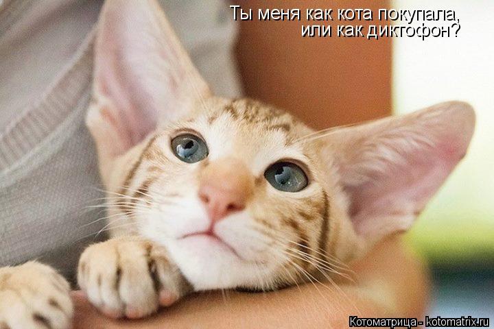 Котоматрица: Ты меня как кота покупала, или как диктофон?
