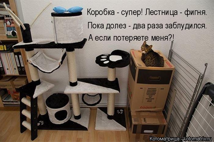 Котоматрица: Пока долез - два раза заблудился. А если потеряете меня?! Коробка - супер! Лестница - фигня.