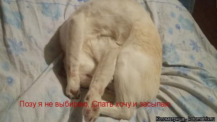 Котоматрица: Позу я не выбираю, Спать хочу и засыпаю.