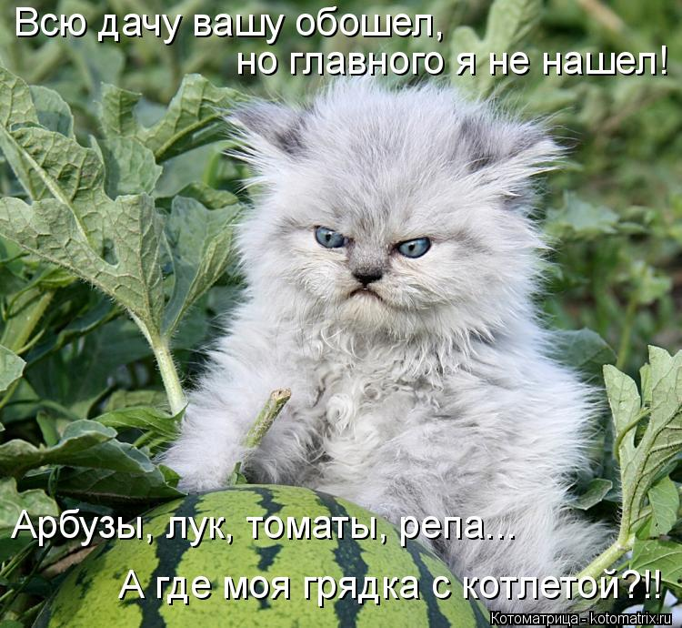 Котоматрица: Всю дачу вашу обошел, но главного я не нашел! Арбузы, лук, томаты, репа... А где моя грядка с котлетой?!!