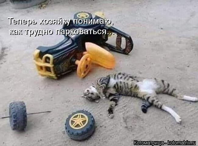 Котоматрица: Теперь хозяйку понимаю,  как трудно парковаться...