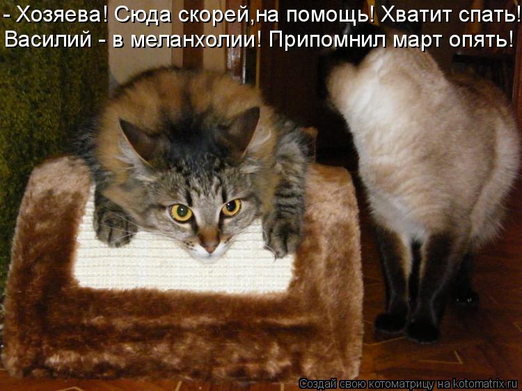 Котоматрица: - Хозяева! Сюда скорей,на помощь! Хватит спать! Василий - в меланхолии! Припомнил март опять!