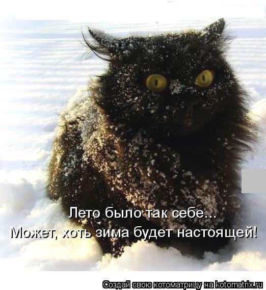 Котоматрица: Лето было так себе... Может, хоть зима будет настоящей!