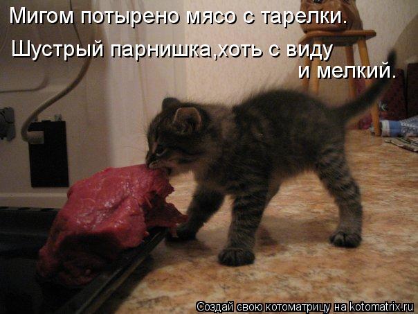 Котоматрица: Мигом потырено мясо с тарелки. Шустрый парнишка,хоть с виду  и мелкий.