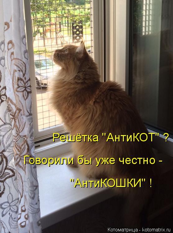 """Котоматрица: Решётка """"АнтиКОТ"""" ? Говорили бы уже честно - """"АнтиКОШКИ"""" !"""