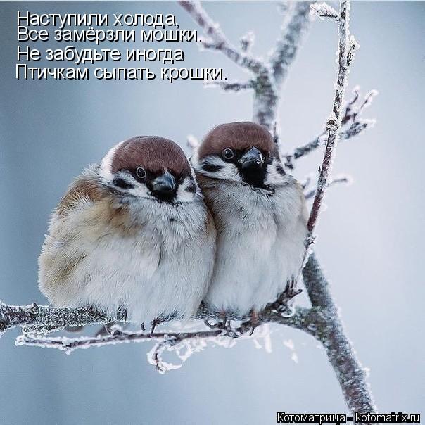 Котоматрица: Наступили холода, Все замёрзли мошки. Не забудьте иногда Птичкам сыпать крошки.