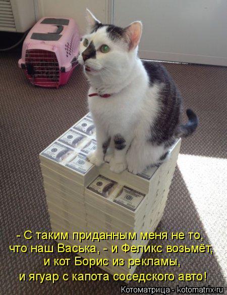 Котоматрица: - С таким приданным меня не то, что наш Васька, - и Феликс возьмёт, и кот Борис из рекламы, и ягуар с капота соседского авто!