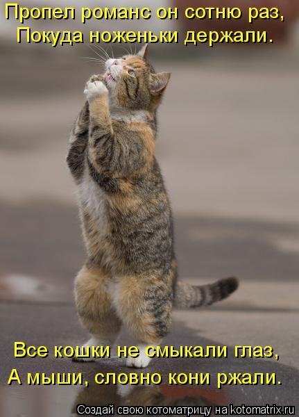 Котоматрица: Пропел романс он сотню раз, Покуда ноженьки держали. Все кошки не смыкали глаз, А мыши, словно кони ржали.