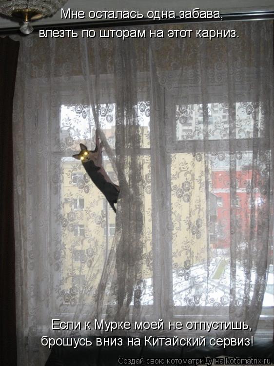 Котоматрица: Мне осталась одна забава, влезть по шторам на этот карниз. брошусь вниз на Китайский сервиз! Если к Мурке моей не отпустишь,
