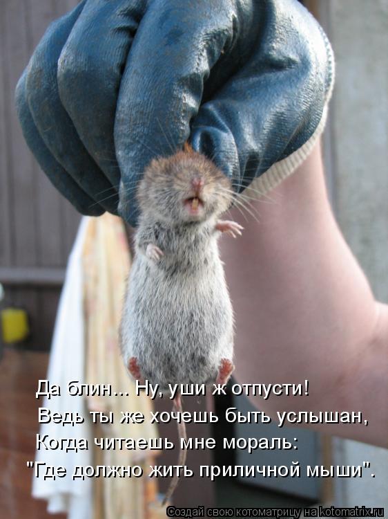 """Котоматрица: """"Где должно жить приличной мыши"""". Когда читаешь мне мораль: Ведь ты же хочешь быть услышан, Да блин... Ну, уши ж отпусти!"""