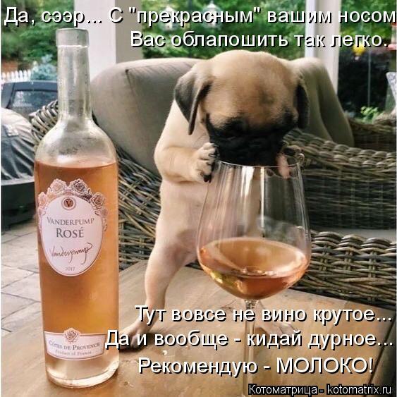 """Котоматрица: Да, сээр... С """"прекрасным"""" вашим носом Вас облапошить так легко. Тут вовсе не вино крутое... Да и вообще - кидай дурное... Рекомендую - МОЛОКО!"""