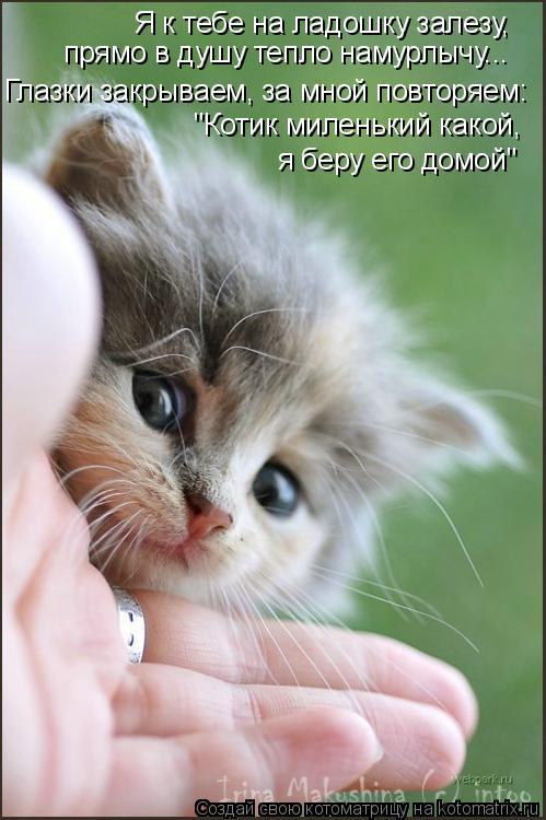 """Котоматрица: Я к тебе на ладошку залезу, Глазки закрываем, за мной повторяем: прямо в душу тепло намурлычу... """"Котик миленький какой,  я беру его домой"""""""