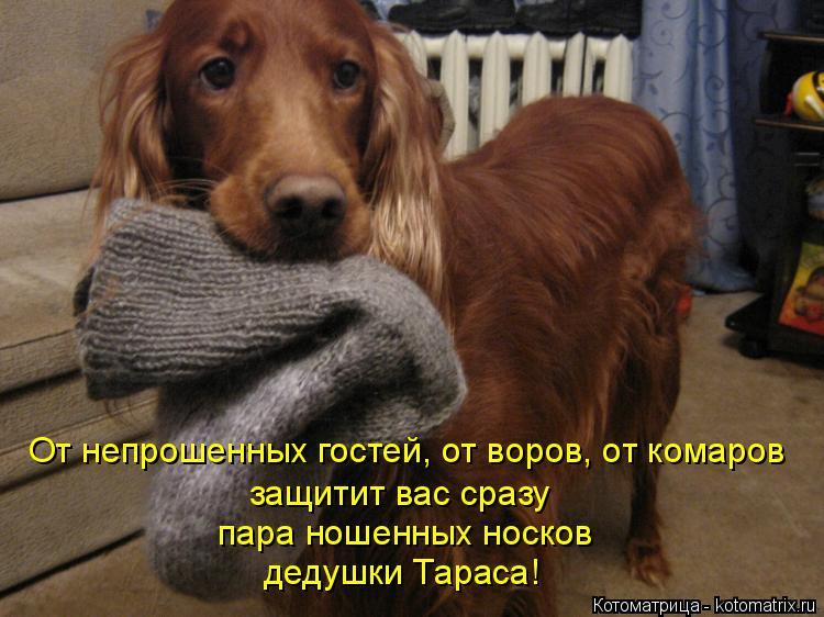 Котоматрица: дедушки Тараса! пара ношенных носков защитит вас сразу От непрошенных гостей, от воров, от комаров