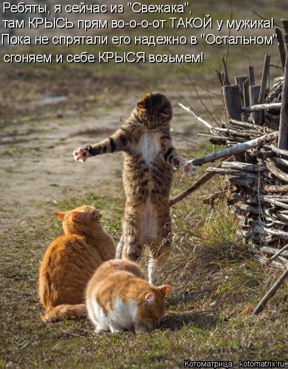 """Котоматрица: Ребяты, я сейчас из """"Свежака"""", там КРЫСЬ прям во-о-о-от ТАКОЙ у мужика! Пока не спрятали его надежно в """"Остальном"""", сгоняем и себе КРЫСЯ возьмем!"""