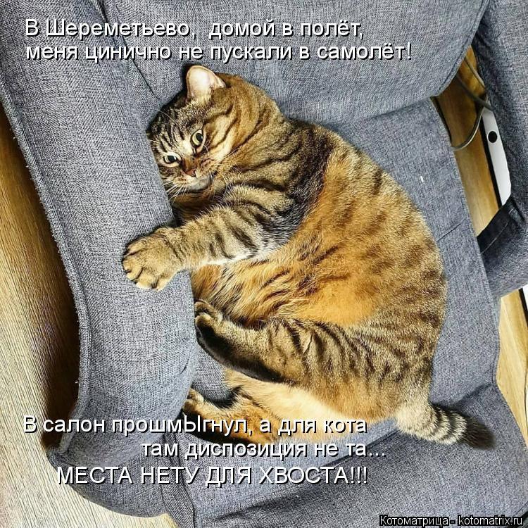 Котоматрица: В Шереметьево,  домой в полёт,  меня цинично не пускали в самолёт! В салон прошмЫгнул, а для кота  там диспозиция не та... МЕСТА НЕТУ ДЛЯ ХВОСТА!