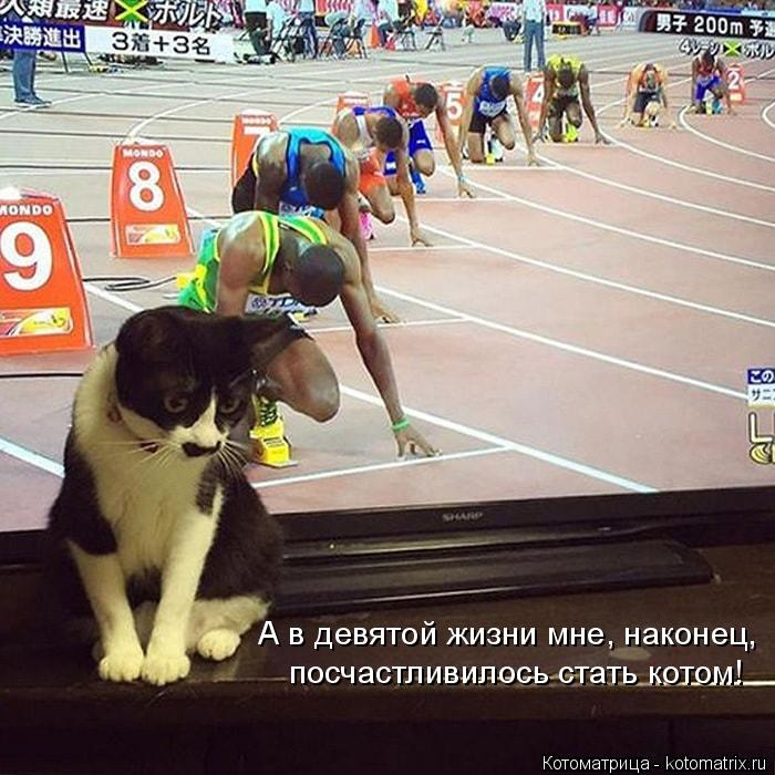 Котоматрица: А в девятой жизни мне, наконец,  посчастливилось стать котом!