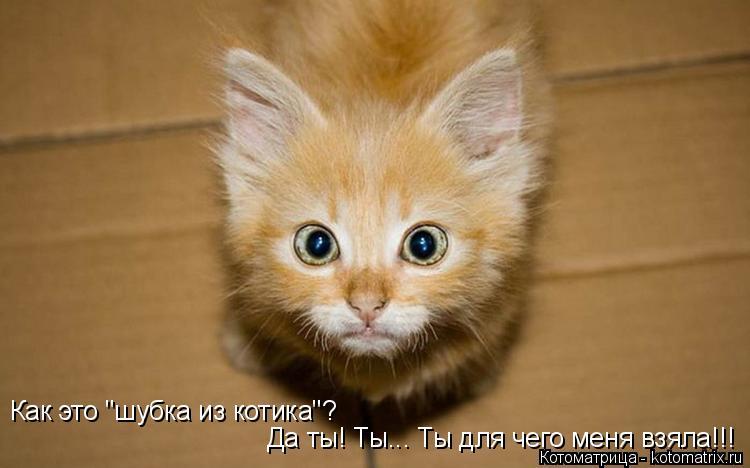 """Котоматрица: Как это """"шубка из котика""""? Да ты! Ты... Ты для чего меня взяла!!!"""